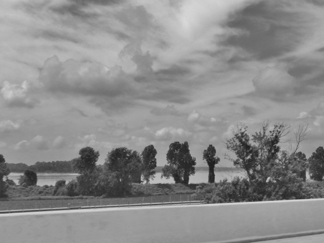 Trees along the Ohio River